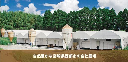 自然豊かな宮崎県西都市の自社農場