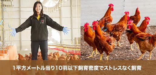 1平方メートル当たり10羽以下飼育密度でストレスなく飼育